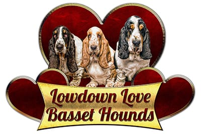 Lowdown Love Basset Hounds